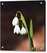 Snowflake Flowers Acrylic Print