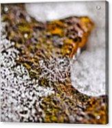 Snowflake On Rust Acrylic Print