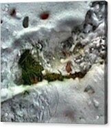 Snowgrassleafcomp 2009 Acrylic Print