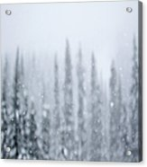 Snowing Falling In The Forest Acrylic Print