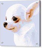 Snowman - White Chihuahua Acrylic Print
