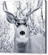 Snowstorm Deer Acrylic Print
