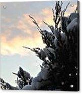 Snowvember Sunrise Acrylic Print