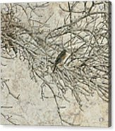Snowy Bird Acrylic Print