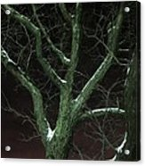 Snowy Branches Acrylic Print by Guy Ricketts
