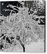 Snowy Branches In Darkness Acrylic Print