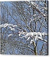 Snowy Branches With Blue Sky Acrylic Print