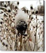 Snowy Cap Acrylic Print