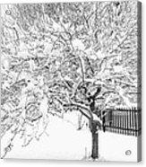 Snowy Crab Apple Acrylic Print