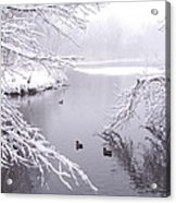 Snowy Day Ducks Acrylic Print