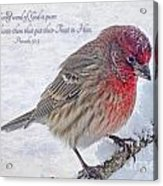 Snowy Day Housefinch With Verse  Acrylic Print