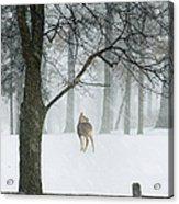 Snowy Deer Acrylic Print