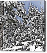 Snowy Dreams  Acrylic Print