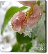 Snowy Drop Acrylic Print