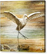 Snowy Egret Dancing  Acrylic Print