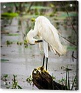 Snowy Egret In Swamp Acrylic Print