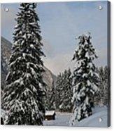 Snowy Fir Trees  Acrylic Print