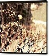 Snowy Flowes And Layers Acrylic Print