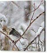 Snowy Grace Cardinals Acrylic Print