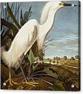 Snowy Heron Or White Egret Acrylic Print