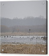 Snowy Morning On The Pond Acrylic Print