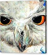 Snowy Owl - Female - Close Up Acrylic Print by Daniel Janda