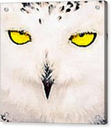 Artic Snowy Owl Painting Acrylic Print