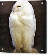 Snowy Owl Vintage  Acrylic Print