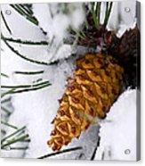 Snowy Pine Cone Acrylic Print