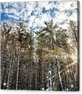 Snowy Pines With Sunflair Acrylic Print