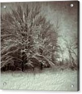 Snowy Treasure Acrylic Print