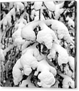 Snowy Tree - Black And White Acrylic Print