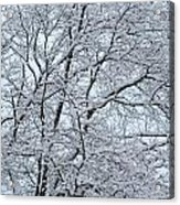 Snowy Tree Limb Maze Acrylic Print