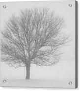 Snowy Tree Acrylic Print