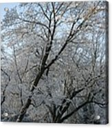 Snowcovered Trees Acrylic Print