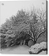Snowy Trees In Black And White Acrylic Print