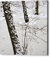 Snowy Trees In Frozen Pond - Winter Forest Acrylic Print by Matthias Hauser
