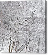 Snowy Trees In Winter Park Acrylic Print