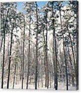 Snowy Trees Acrylic Print