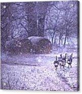 Snowy Turkey Trail Acrylic Print