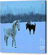 Snowy Walk Acrylic Print