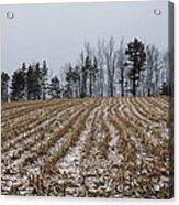 Snowy Winter Cornfields Acrylic Print
