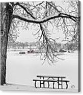 Snowy Winter Country Cottonwood Tree View Bwsc Acrylic Print by James BO  Insogna