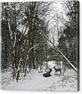 Snowy Wooded Path Acrylic Print