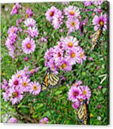 So Many Wings Acrylic Print