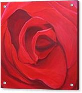 So Red The Rose Acrylic Print by Hunter Jay