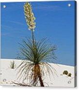Soap Yucca Acrylic Print