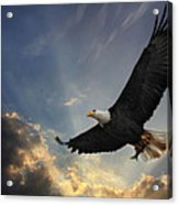 Soar To New Heights Acrylic Print