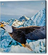 Soaring Bald Eagle Acrylic Print by Gary Keesler