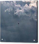 Soaring Gull - Bird Flying In A Cloudy Sky Acrylic Print